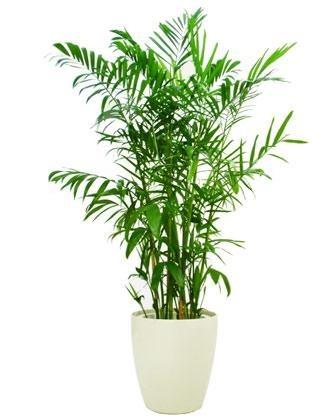 jasa sewa tanaman hias